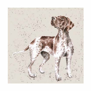 Kort - German Shorthaired Pointer