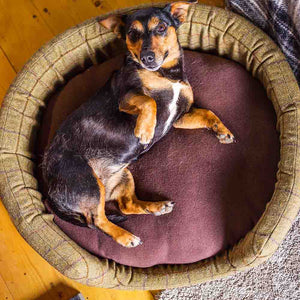 Pet Oval Bed - Large