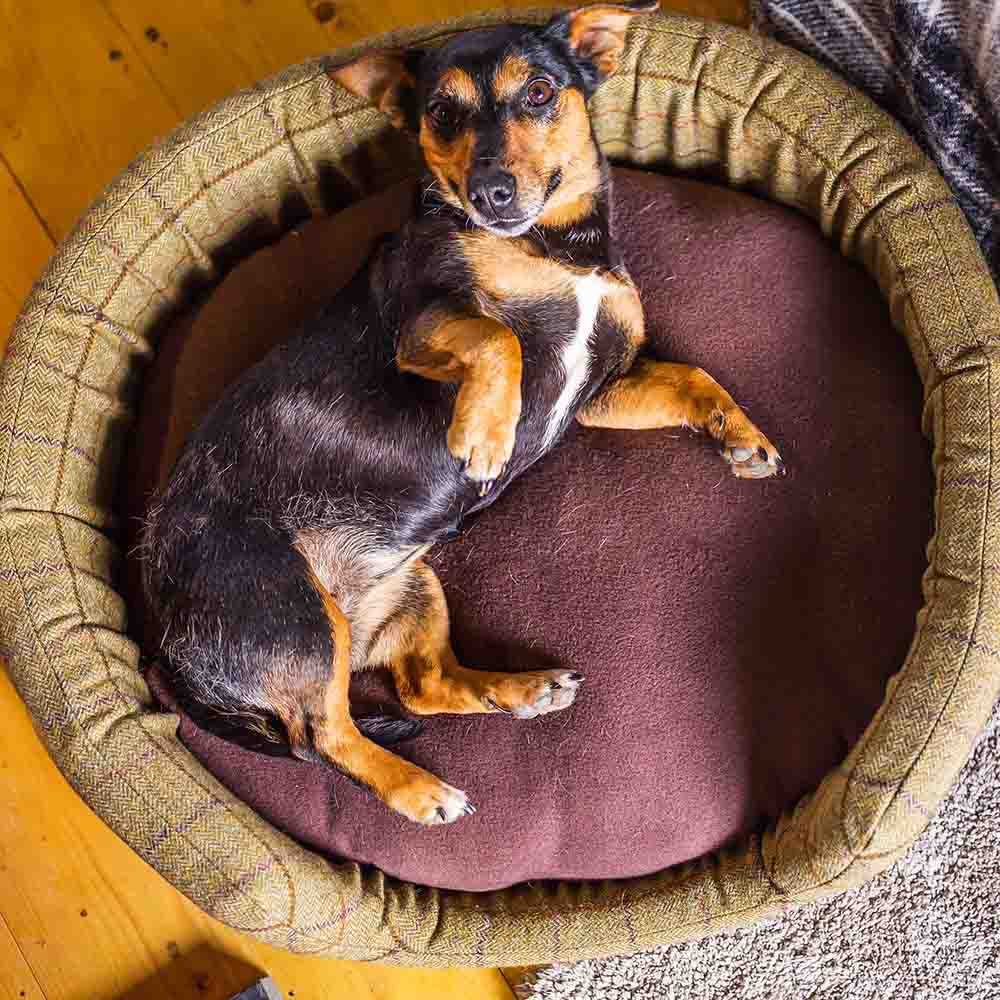 Pet Oval Bed - Small
