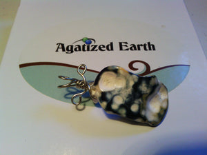 Rare Black Fossil - Agatized Earth