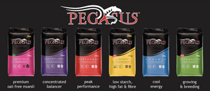 "Pegasus Coolmax a Great ""All-Rounder"" Feed for Pleasure and Performance Horses"