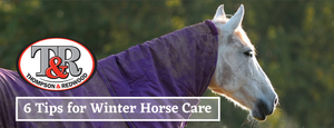 6 TIPS FOR WINTER! How to prepare your horse and hit spring in full stride.