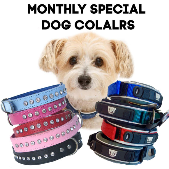 Monthly Special - Dog Collars