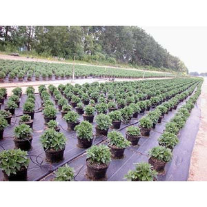 "Sunbelt 3.2oz Black Ground Cover 15' 6"" x 300"