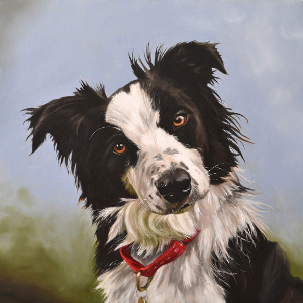 Dog portrait of a border collie