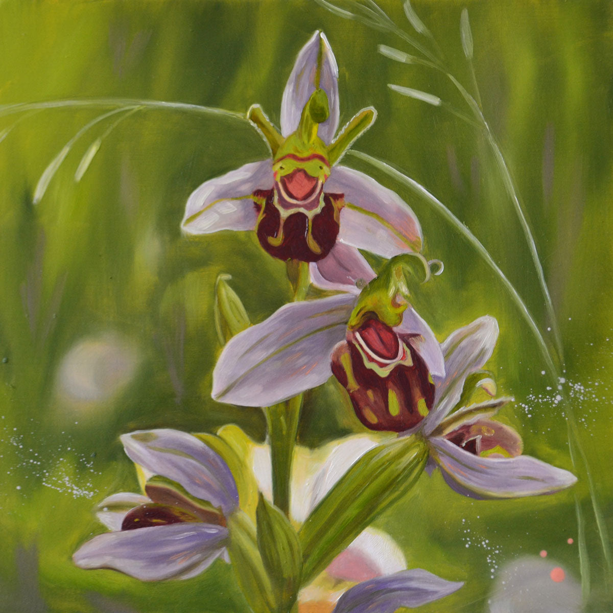Bee orchids - original oil painting