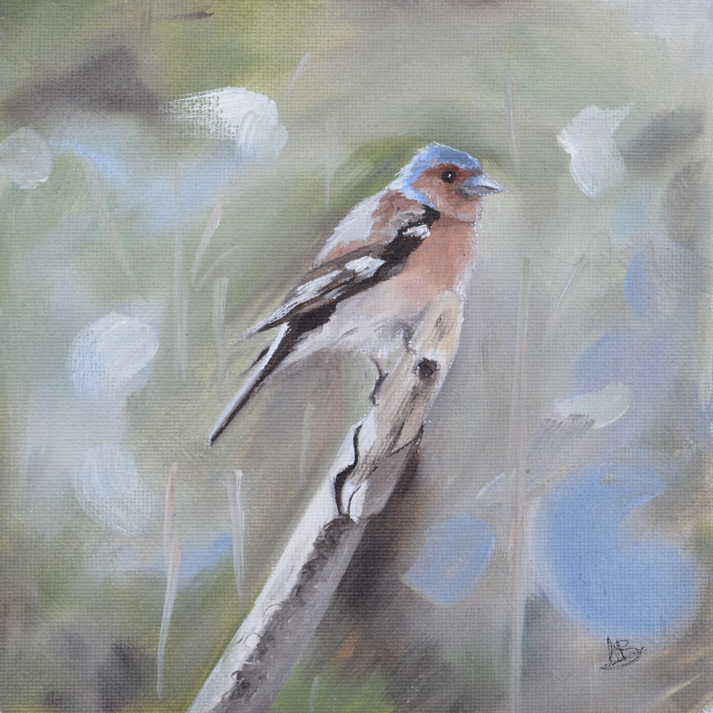 Male chaffinch oil study
