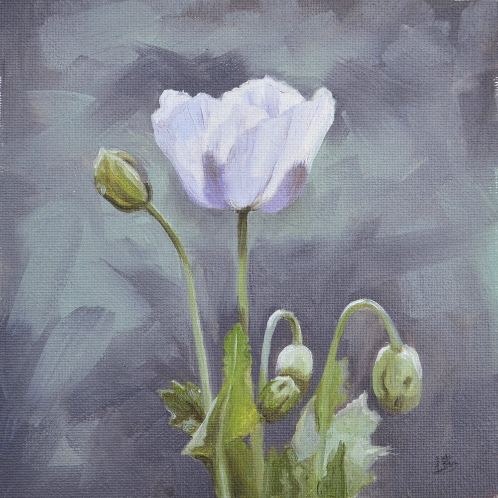Pale purple poppy oil study