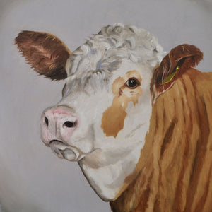 Simmental cow print