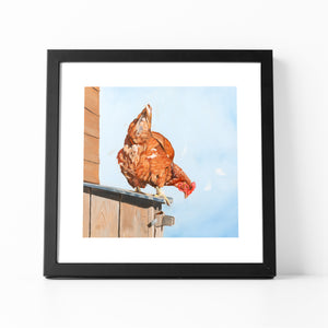 Chicken print framed