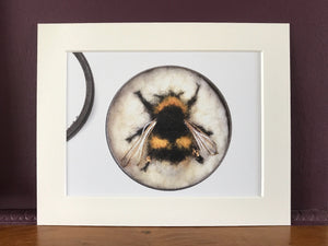 A5 Bee prints in mount - Queen Broken-belted Bumblebee