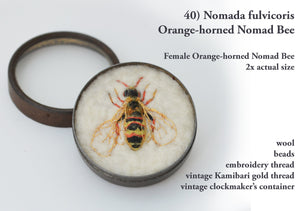 40bee) Female Orange-horned Nomad Bee