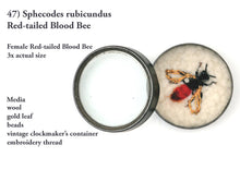 Load image into Gallery viewer, 47bee) Female Red-tailed Blood Bee