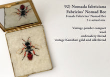 Load image into Gallery viewer, 92bee - Nomada fabriciana - Female Fabricius' Nomad Bee
