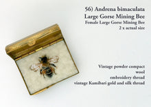 Load image into Gallery viewer, 56bee -   Andrena bimaculata - Female Large Gorse Mining Bee