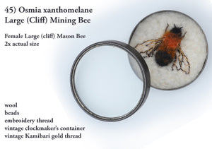 45bee) Female Large (cliff) Mason Bee