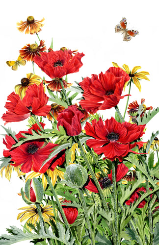 Poppy and Gaillardia