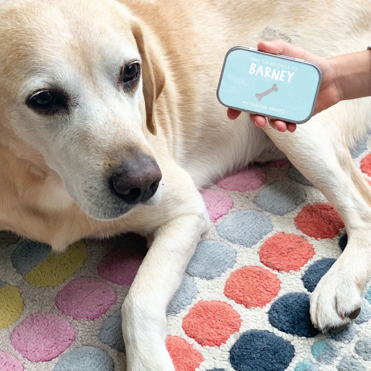 personalised pet treat keepsake tins