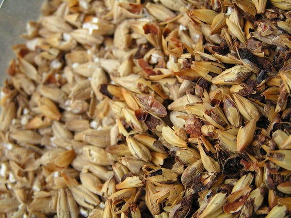 Malted barley, an essential ingredient is making whiskeys.