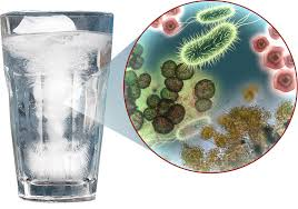 Bacteria in drinking water