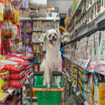 Bulk Buying Dog Food - Why Do I Need That Much?