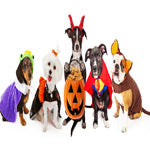 Halloween Costume Ideas for Your Pet