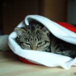 Christmas tips for cat owners