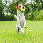 Wimbledon Celebration: How to Teach Your Dog to Fetch