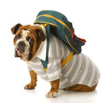 Preparing Your Dog for Back-To-School Blues