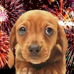 Fireworks tips for Dogs!