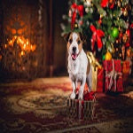 Bringing the Christmas Spirit Into Your Home With the Help of Your Dog