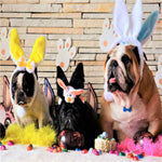 Things to do with your dog over the long Easter weekend