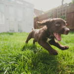 How to train your puppy - the essentials
