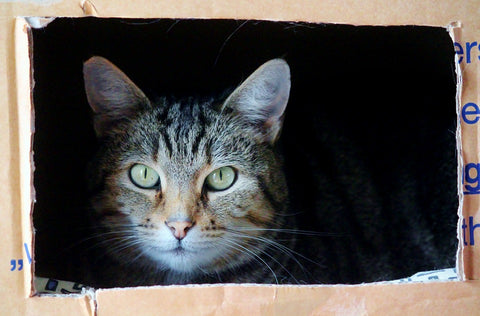 cat sitting in side a cardboard box