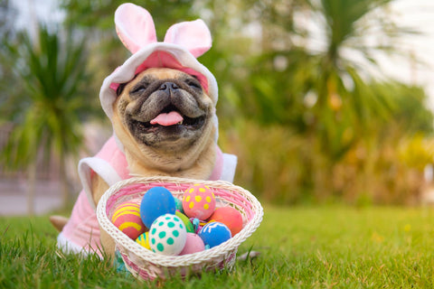 Dog easter hunt