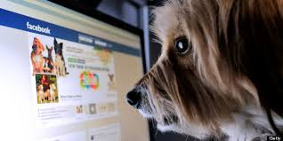 dog looking at facebook on the computer