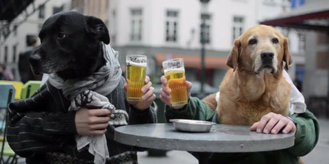 dogs with arms having a beer