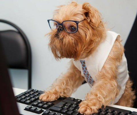 dog with glasses on a computer