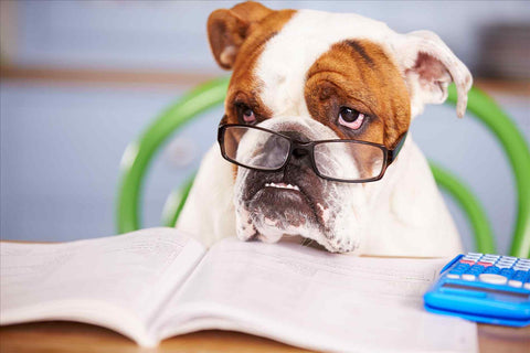 bulldog wearing glasses at a desk