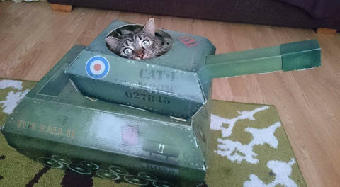 cat hiding in a tank