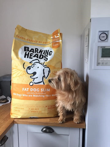 small dog with fat dog slim food