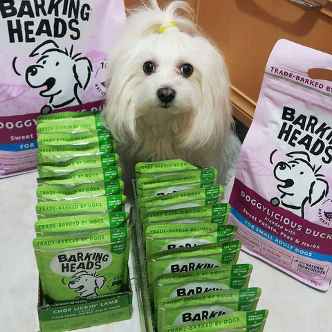 Maltese dog with barking heads dog food