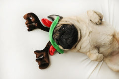 dog with reindeer antlers