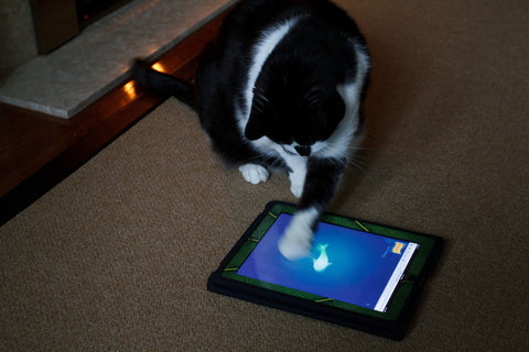 cat playing with an ipad