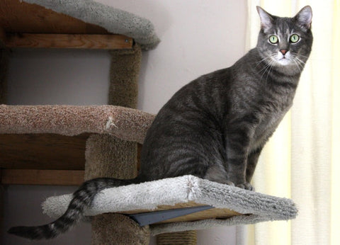 grey cat sitting on a cat tree