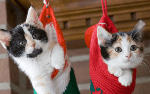 kittens hanging in christmas stockings