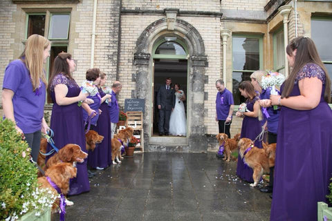 wedding dag with dog guests