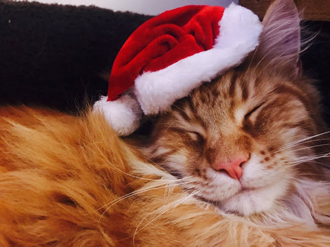 ginger cat wearing a santa hat
