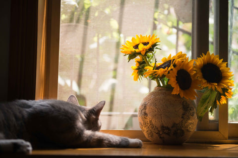 cat lying down next to a vase of sunflowers