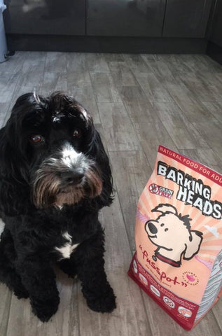 black dog sitting next to a bag of barking heads